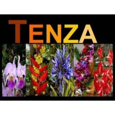 MUNICIPIO DE TENZA